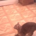 高いところへのぼろうと、勇気を振り絞ってネコがジャンプをした結果・・・