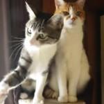 [正反対] ネコじゃらしに反応するネコと、全く反応しないネコ