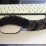 [猫の進化] シッポでマウスをクリック