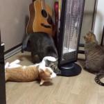 ネコをクルクル回すネコ、そしてそれを見守るネコ