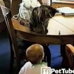 赤ちゃんと遊んであげるネコ♪