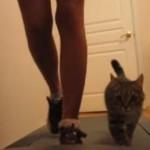飼い主と一緒にルームランナーで運動するニャンコ