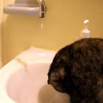 反省??頭に水滴をうけながらジッっとしているネコ