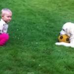 [動画] 自分が遊んでいたボールを赤ちゃんに貸してあげるとても優しいワンちゃん