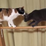 ネコも棒から落ちる♪