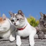 外でひなたぼっこをする猫たち