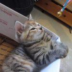 揺れるおもちゃを見ているネコが催眠術にかかる瞬間