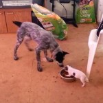 小さな犬が、ご飯を独り占めして大きな犬を寄せつけない