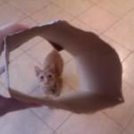 箱からニャンコを覗くと飛び込んできて・・・!?