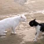 [一触即発] 睨み合う二匹の猫の意外な展開・・