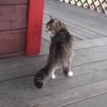 ルンルン♪軽快に走るネコちゃん