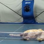 どんな球も打ち返す卓球ネコ