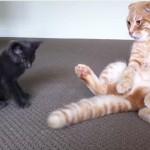 しっぽを振るだけで子猫の相手をする、ものぐさな大人ねこ