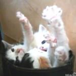 ブーツに入ってバンザーイをする3匹の子ネコ