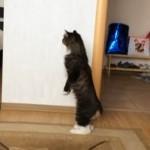 「だ、だれニャ・・・?」 赤ちゃんが生まれて家にやってきた時のネコちゃんの反応