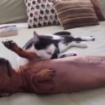 「おちつくニャ!」興奮するワンちゃんを落ち着かせるネコ