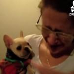 愛犬に「I love you」と話しかけると「I love you」と返してくれて、ご主人が号泣♡