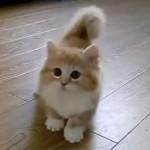 ネコじゃらしの動きに追いつけない子ネコにキュン♡