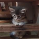 子猫が段差におさまっている姿♪
