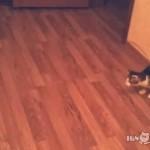 助走をつけようとしたら後ろが壁だった時、ネコはどうする?
