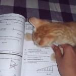 勉強の邪魔をする子ネコちゃん