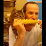 人間と一緒にとうもろこしを食べる猫