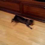 レーザーポインターをパタパタ追いかける猫の動きがカワイイ♪