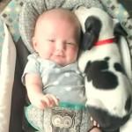 [仲良し] 赤ちゃんにピッタリ寄り添って寝るワンコちゃん
