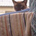 家を覗く不審ネコ、家主に気づかれて逃げるもジャンプ失敗