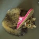 スリッパにじゃれて遊ぶネコにアクシンデントが・・・