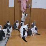 ひまを持て余したネコ達の遊び・・・