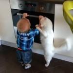 オーブンにイタズラをする子供を優しく注意する優しいニャンコ