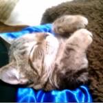 初めてのこたつで虜になってしまい、ぐっすり眠る子ネコちゃん