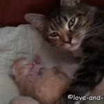 生まれたばかり子ネコを守る親ネコ