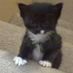 子猫ちゃんたちが階段登りに挑戦♪