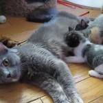 「おっぱいの時間だニャン」と声をかけたら仔猫がどんどん増えてくる♡