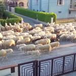 住宅街を行進する羊の大群、よく見ると・・・