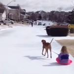 少女の乗るソリを引っ張って遊ぶワンちゃん