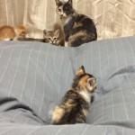 毎日開催される、子ネコの運動会が可愛いすぎる