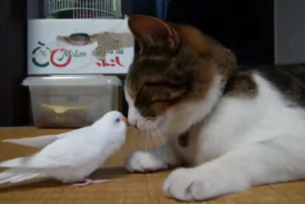 遊びたいインコと、寝たい猫のジャレ合いが可愛いすぎる♪