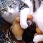 自分の子供と3匹のヒナを守る母ネコ