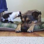 ワンちゃんと仲良くなりたいネコちゃんが頭でスリスリ