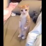 コロコロが気になって、立ち上がる子猫ちゃん