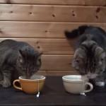 またたび茶でティータイムをしてみたら・・・