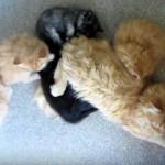 磁石のようにくっついて寝る母ネコと子供達