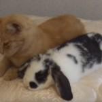 ネコちゃんとウサギさんの添い寝♡