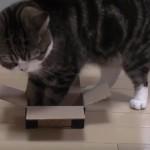 箱好きなニャンコに、小さすぎる箱を用意してみたら・・・