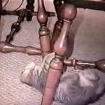 ネコちゃんが新しい移動方法を発見しました!