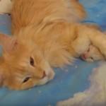 外は花火、寝ている子猫の耳をふさぐ優しい母猫