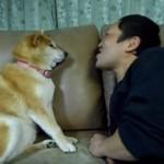 「チュ~を拒む柴犬」柴犬マリちゃんと飼い主のコント